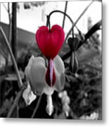 My Bleeding Heart Metal Print