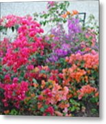 My Colorful Bouganville Metal Print