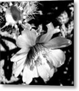 My Desert Rose Metal Print