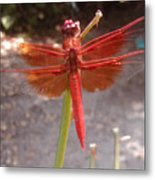 My Dragonfly Metal Print