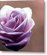 My Favorite Rose Metal Print