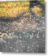 My First Manipulated Image Crowd Of Dandelions In Shadow Of Tree Branches Metal Print