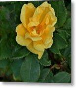 My First Yellow Rose Metal Print