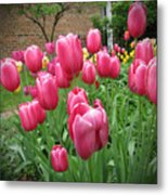 My Focus Was On The Tulips Metal Print