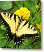 My Garden Visitor Metal Print