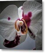 My Growling Dragon Orchid. Metal Print