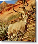 My Home You Can Go Now 7309 Metal Print