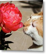 My Kitty In Love With A Peony Metal Print