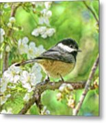 My Little Chickadee In The Cherry Tree Metal Print