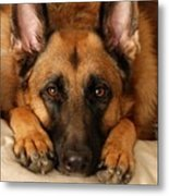 My Loyal Friend Metal Print