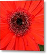 My Name Is Red Metal Print