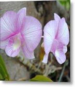 My Orchid # 15 Metal Print