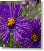 My Purple Ways Metal Print