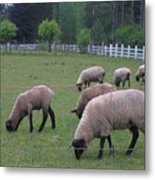 My Sheep Know My Voice Metal Print