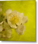 My Sweet Wild Rose Metal Print