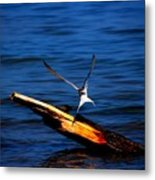 My Tern To Perch Metal Print