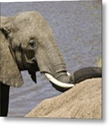 My Trunk Needs Drying Out Metal Print