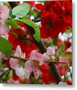 My Two Quince Worth Metal Print