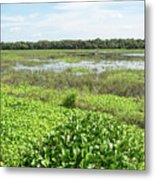 Myakka River And Marshes Metal Print