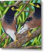 Mynah Birds #474 Metal Print