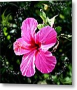 Mystical Bloom Metal Print
