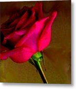 Mystical Rose Metal Print