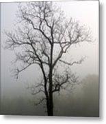Mysty Tree 3 Metal Print