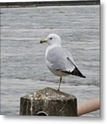 N Y C Water Gull Metal Print