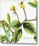 Nanea Flower Art Metal Print