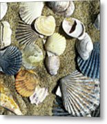 Nantucket Shells Metal Print