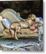 Nap Time Metal Print by Edward Sobuta