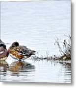Nap Time On The Pond Metal Print