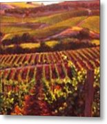 Napa Carneros Summer Evening Light Metal Print