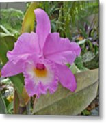 Naples Orchid 3 Metal Print