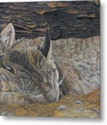 Naptime - Canadian Lynx Metal Print