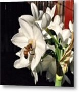 Narcissus And The Bee 1 Metal Print