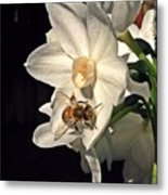 Narcissus And The Bee 2 Metal Print by Daniele Smith