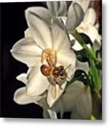 Narcissus And The Bee 3 Metal Print