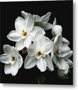 Narcissus The Breath Of Spring Metal Print