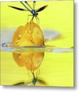 Narcissus - Damselfly Reflected In The River Metal Print