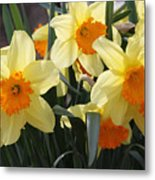 Narcissus Fortissimo Metal Print