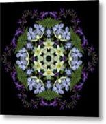 Narcissus Group 2 Metal Print