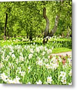 Narcissus In Apple Garden Metal Print