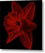 Narcissus Red Flower Square Metal Print