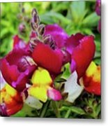 Nascent Blossoms  Metal Print
