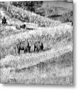 National Bison Range Wildlife Refuge Mt Usa Metal Print