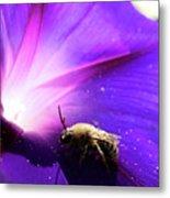 Native Bee On A Purple Flower Metal Print