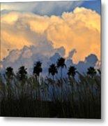 Native Florida Metal Print