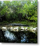 Native Floridian Metal Print
