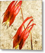 Native Virginia Columbine Metal Print
